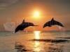 SCARICARE delfini al tramonto