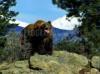 DOWNLOAD oso furioso