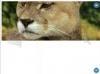 Download tigra scroller