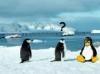 SCARICARE confused penguin