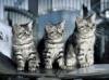 Download tres gatinhos