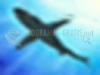 TÉLÉCHARGER oceandive