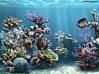 TÉLÉCHARGER animated 3d aquarium