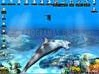 Download free d dolphins animated wallpapers