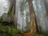 Download papel de parede bosque de sequoias
