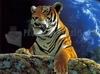 SCARICARE tigre