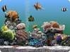 Download serenescreen marine aquarium