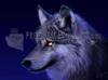 SCARICARE il lupo