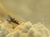 TÉLÉCHARGER en vuelo
