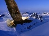 DOWNLOAD the flight of the eagle