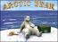 3D Artic Bear Advanced