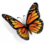 Fantastic Butterfly Animated Wallpaper