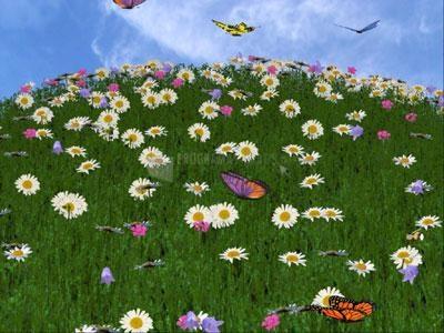 Pantallazo 3D Camomile Field Screensaver