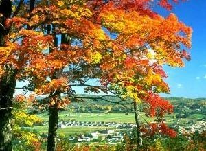 Pantallazo Colors of Autumn Screensaver