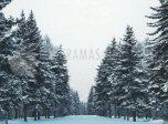 Pantallazo Winter Forest ScreenSaver