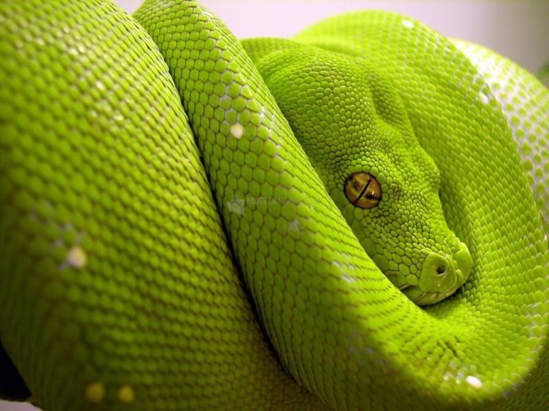 Pantallazo Serpiente