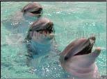 Pantallazo Dolphins ScreenSaver
