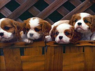 Pantallazo Puppies Screensaver