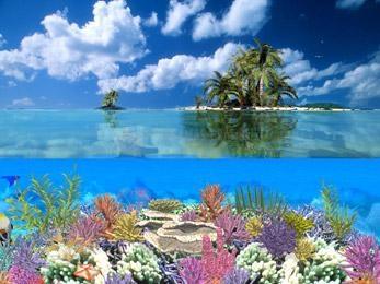 Pantallazo Coral Island Screensaver