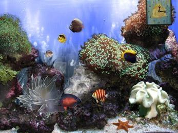 Pantallazo Anemones Reef