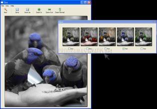 Pantallazo Tint Photo Editor