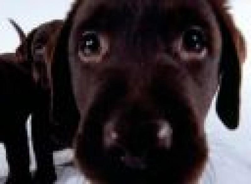 Pantallazo Dog Screensaver