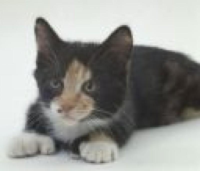 Pantallazo Free Cat Screen saver