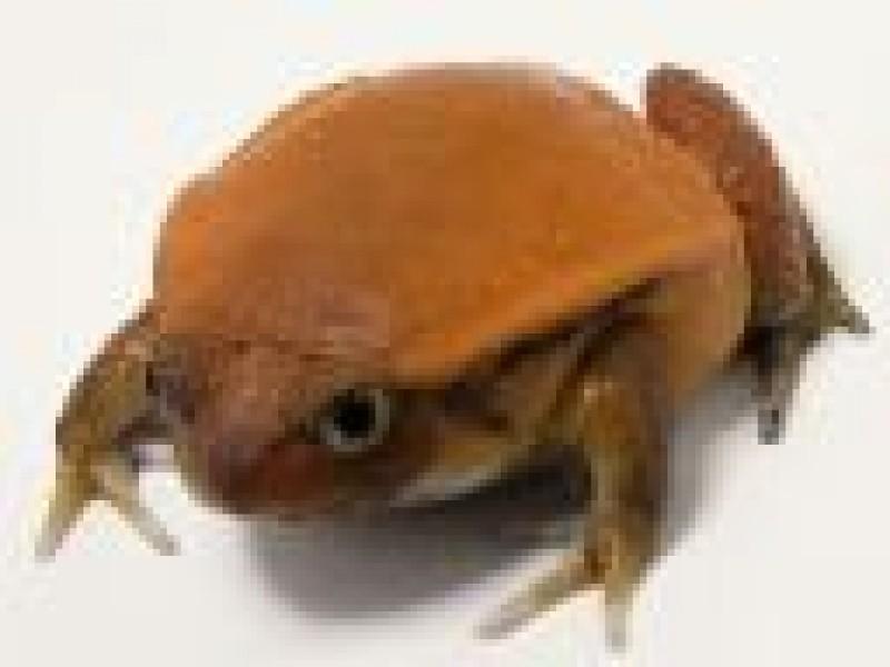 Pantallazo Free Frog Screen saver