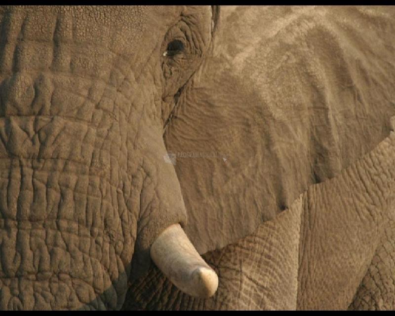 Pantallazo Elephant Screen Saver