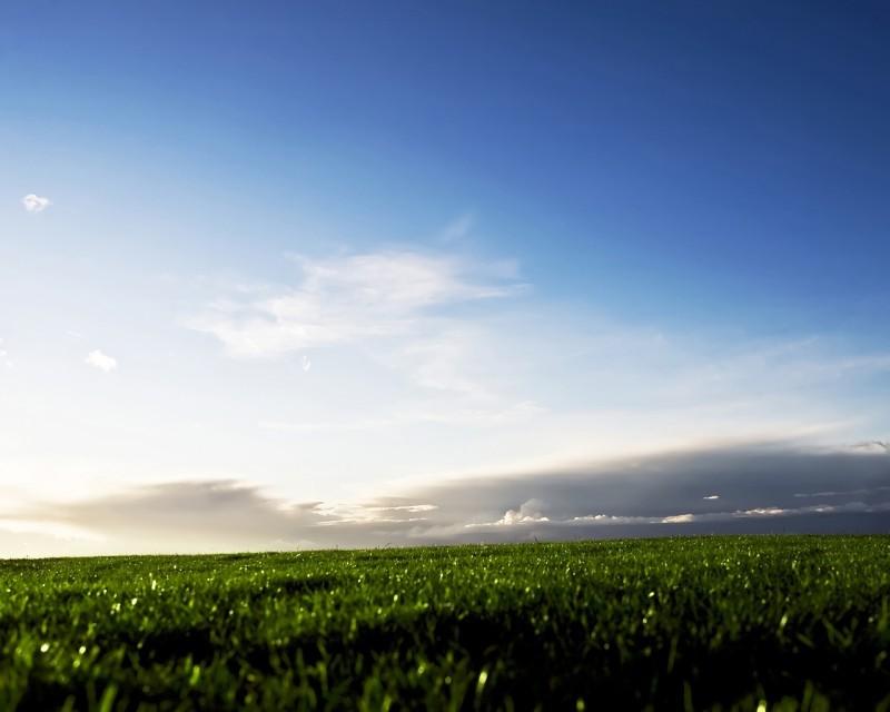 Pantallazo Los Verdes Campos de Suecia