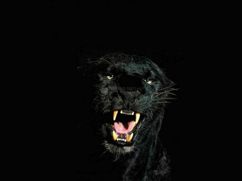Pantallazo Pantera Nocturna