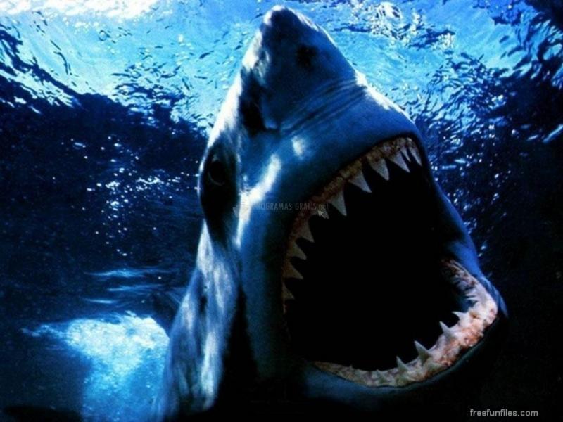 Pantallazo El Gran Tiburon