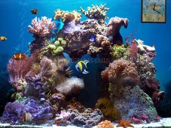 Pantallazo Beautiful Reef
