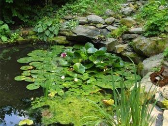 Pantallazo Swamp