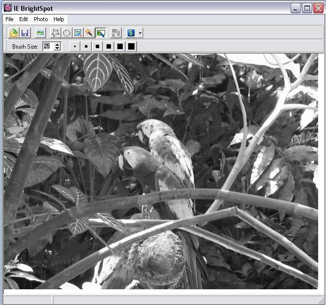 Pantallazo ImageElements BrightSpot