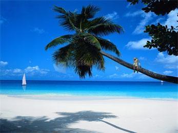 Pantallazo Tropic Paradise