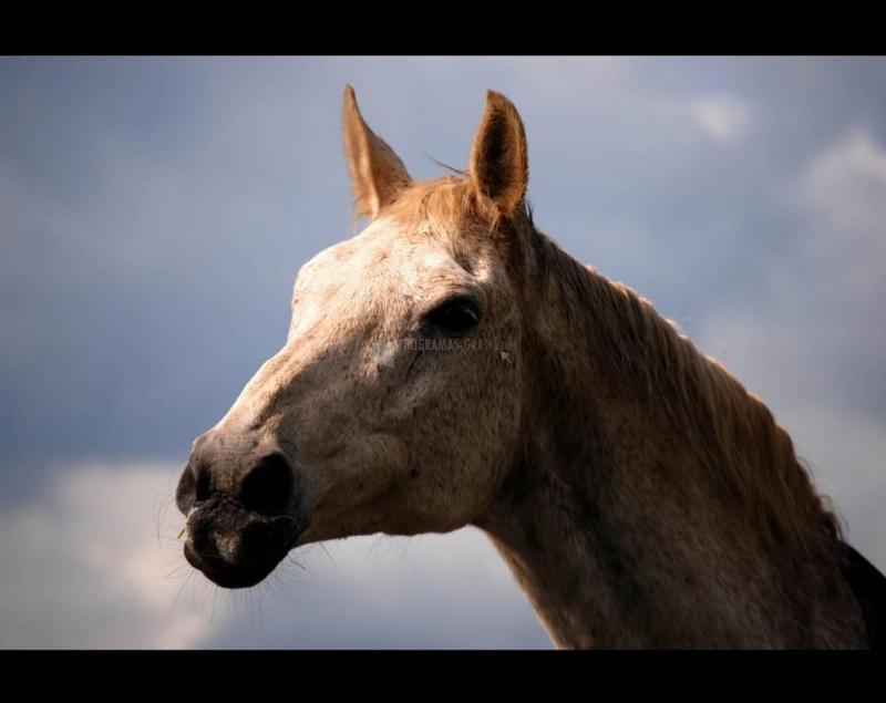 Pantallazo Horse Screensaver