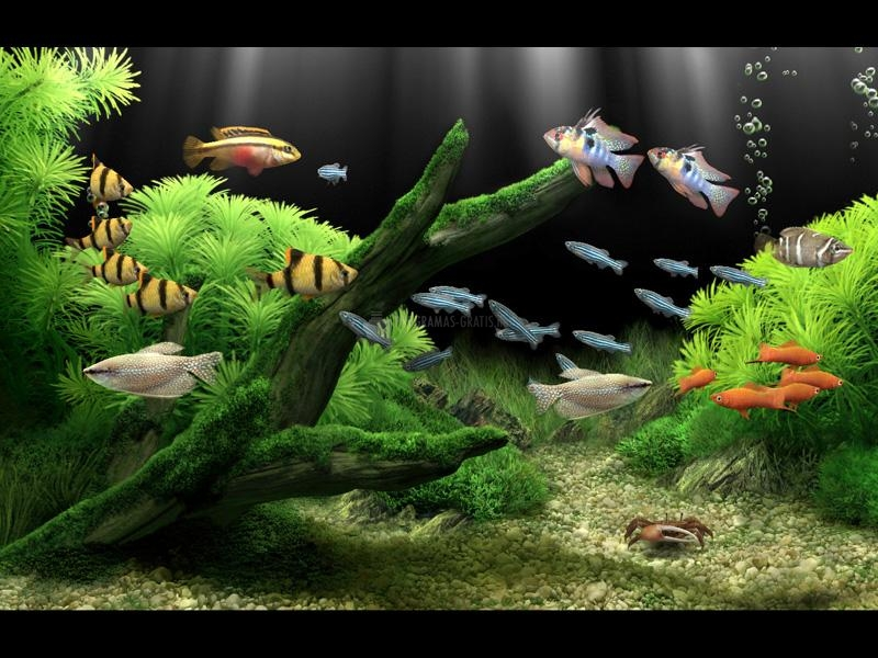 Pantallazo Dream Aquarium XP Screensaver