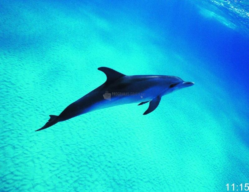 Pantallazo Free Dolphin Picture Screensaver