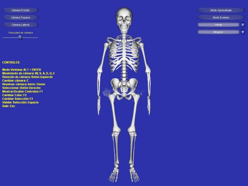 Pantallazo Esqueleto 3D