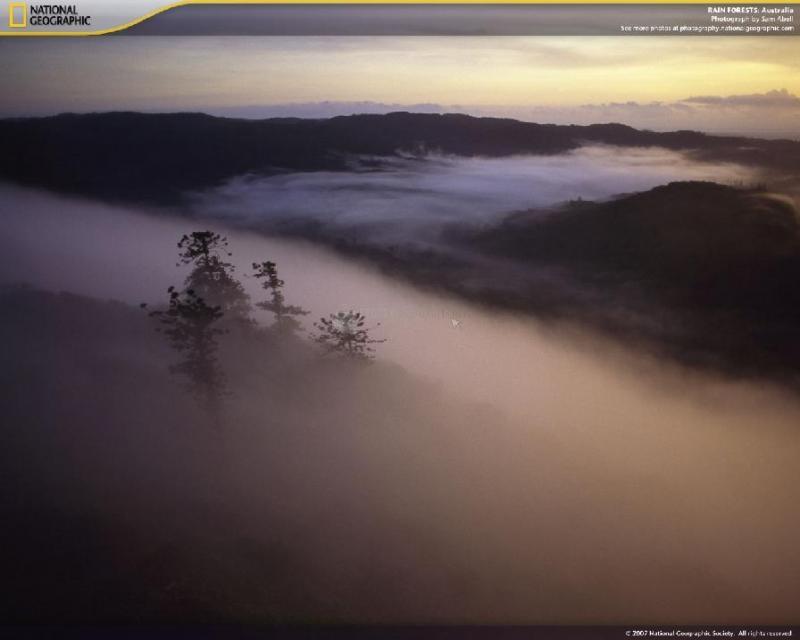 Pantallazo Rain Forests Screensaver
