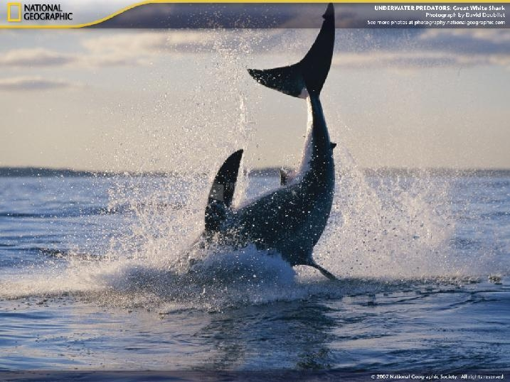 Pantallazo Underwater Predators Screensaver