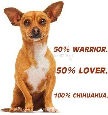 Foto Beverly Hills Chihuahua Screensaver