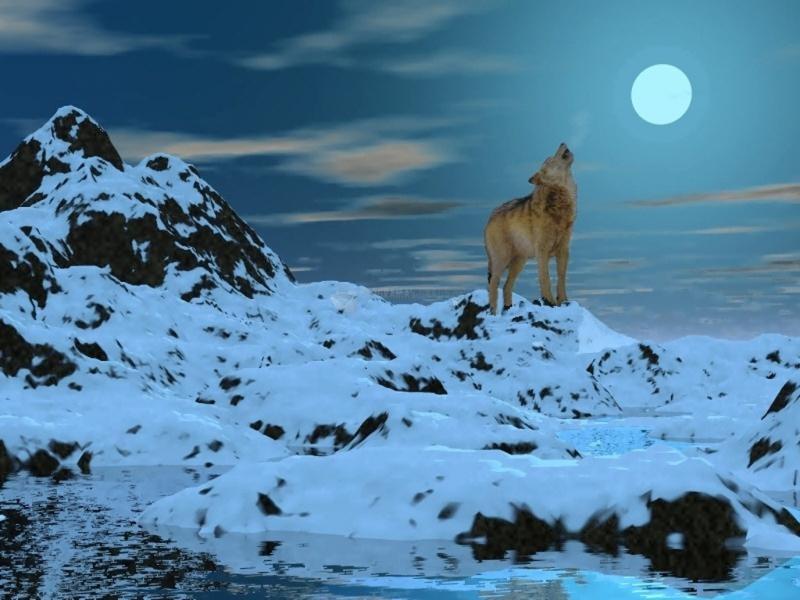 Pantallazo Lobo polar