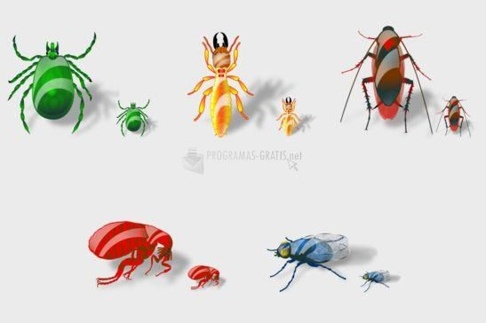 Foto Insects