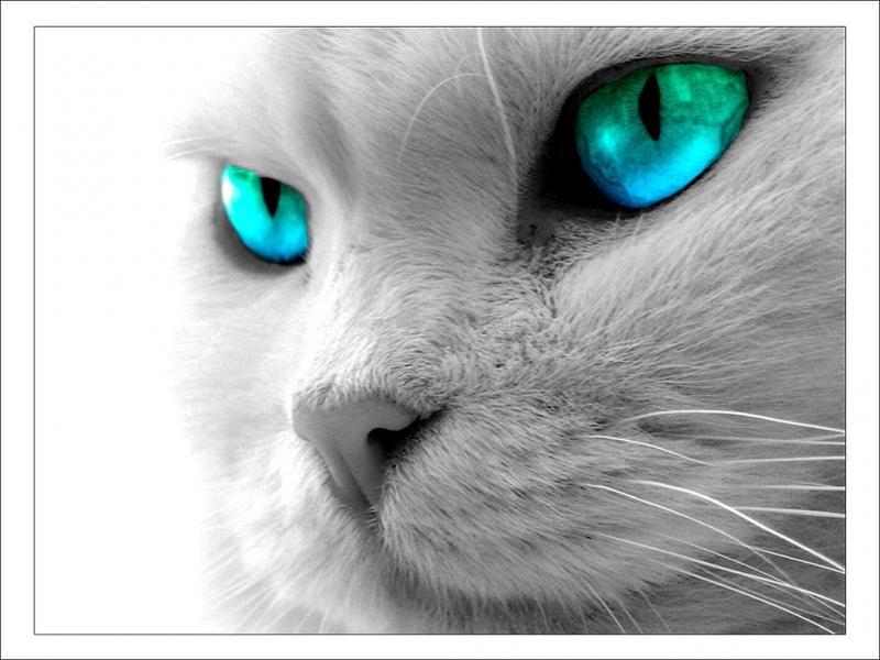 Pantallazo Gato de mirada intensa
