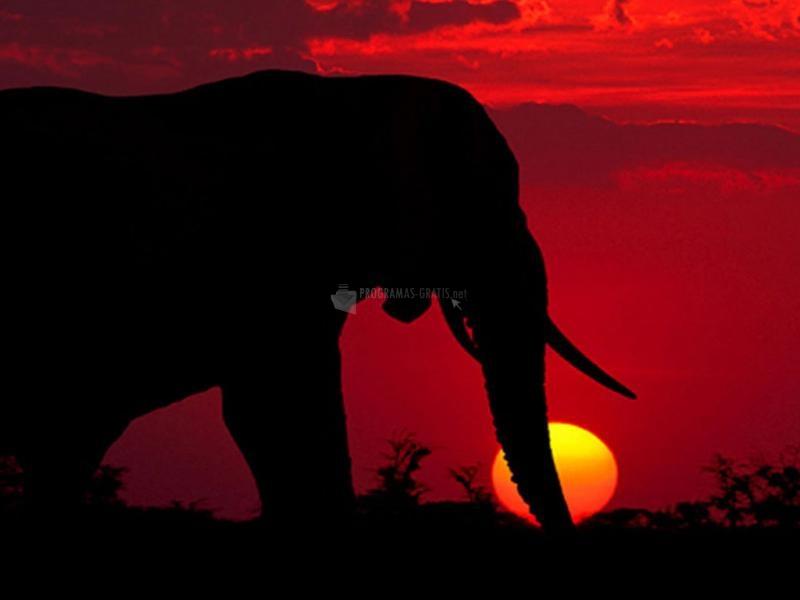 Pantallazo Elefante al anochecer