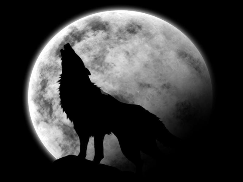 Pantallazo Lobo aullando a la luna