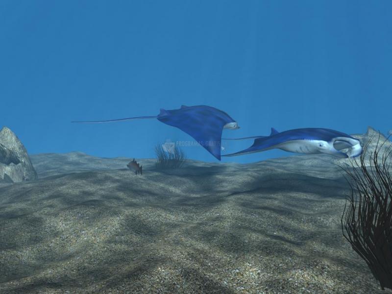 Pantallazo Free 3D Manta Ray Aqua