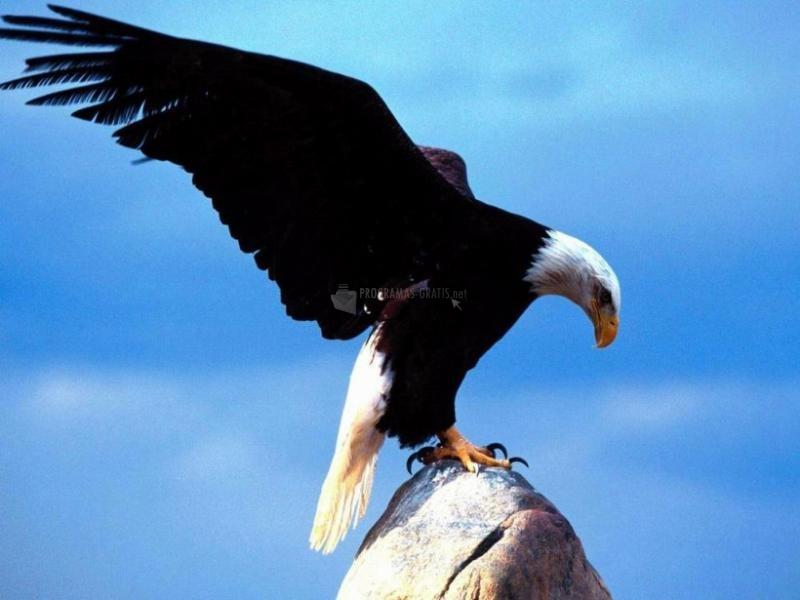 Pantallazo Águila